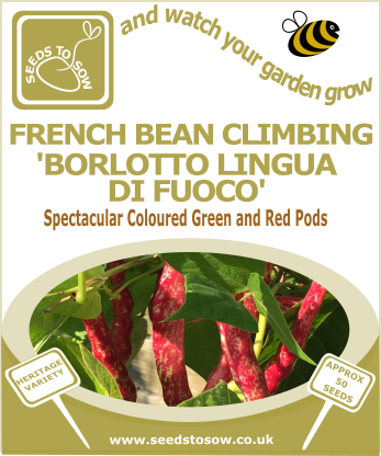 French Bean Climbing 'Borlotto Lingua di Fuoco' - Seeds to Sow Limited