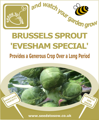 Brussels Sprout Evesham - Seeds to Sow Limited