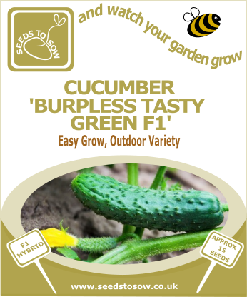 Cucumber Burpless Tasty Green F1 - Seeds to Sow Limited