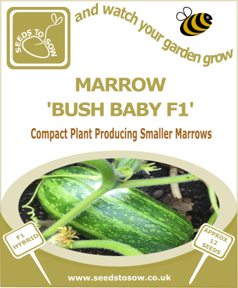 Marrow Bush Baby F1 - Seeds to Sow Limited
