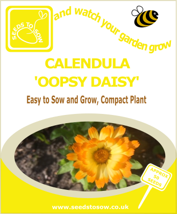 Calendula Oopsy Daisy - Seeds to Sow Limited