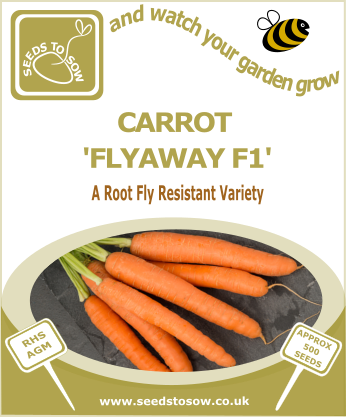 Carrot Flyaway F1 - Seeds to Sow Limited