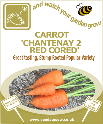 Carrot Chantenay 2 Red Cored - Seeds to Sow Limited