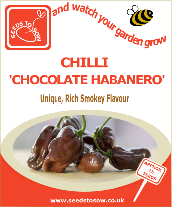 Chilli Chocolate Habanero - Seeds to Sow Limited