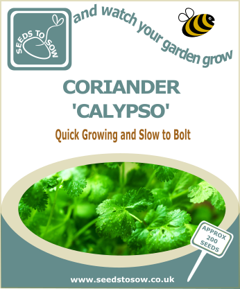 Coriander Calypso - Seeds to Sow Limited