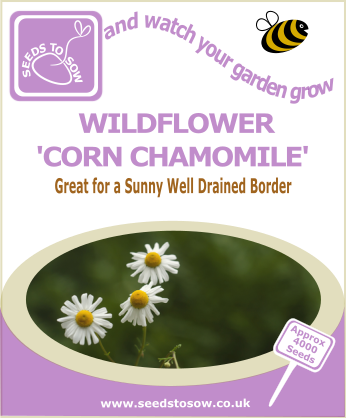 Wildflower - Corn Chamomile - Seeds to Sow Limited