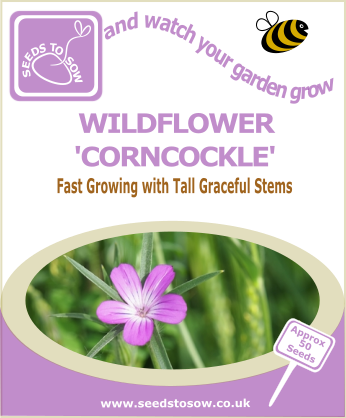 Wildflower - Corncockle - Seeds to Sow Limited
