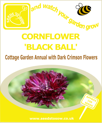 Cornflower - Black Ball - Seeds to Sow Limited
