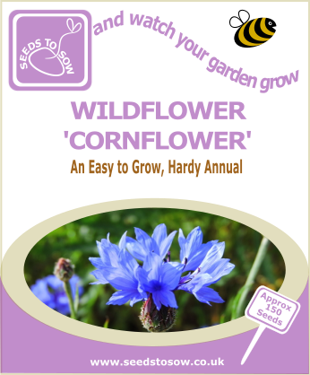 Wildflower - Cornflower - Seeds to Sow Limited