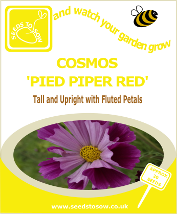 Cosmos - Pied Piper Red - Seeds to Sow Limited