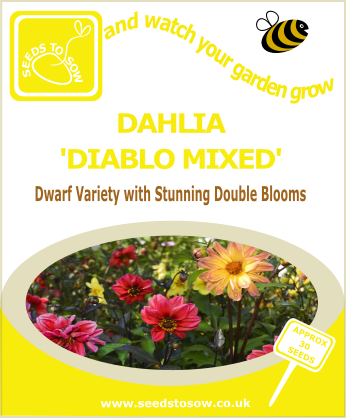 Dahlia - Diablo Mixed - Seeds to Sow Limited