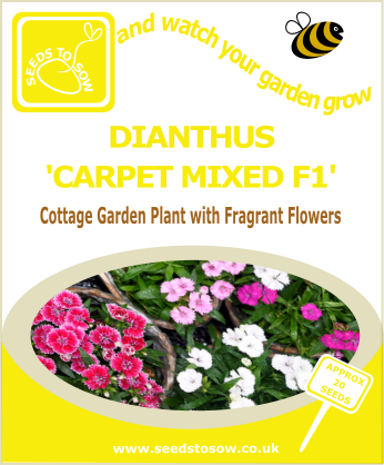 Dianthus - Carpet Mixed F1 - Seeds to Sow Limited