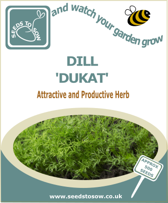 Dill Dukat - Seeds to Sow Limited
