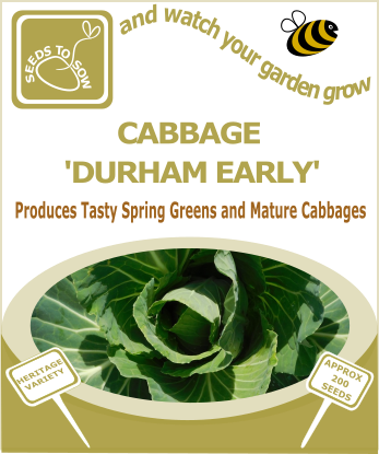 Cabbage Durham Early - Seeds to Sow Limited