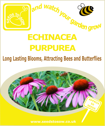 Echinacea purpurea - Seeds to Sow Limited