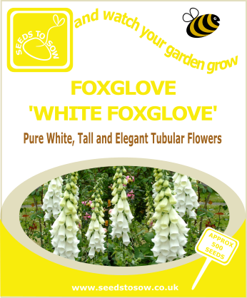 Foxglove - White Foxglove - Seeds to Sow Limited