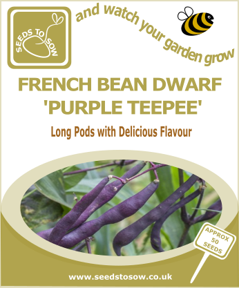 French Dwarf Bean Purple Teepee - Seeds to Sow Limited
