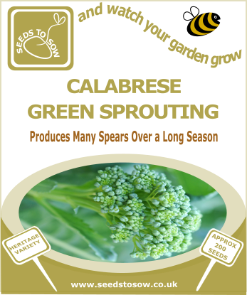 Calabrese Green Sprouting