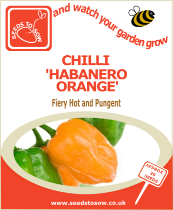 Chilli Habanero Orange - Seeds to Sow Limited