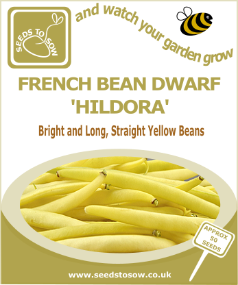 French Dwarf Bean Hildora - Seeds to Sow Limited