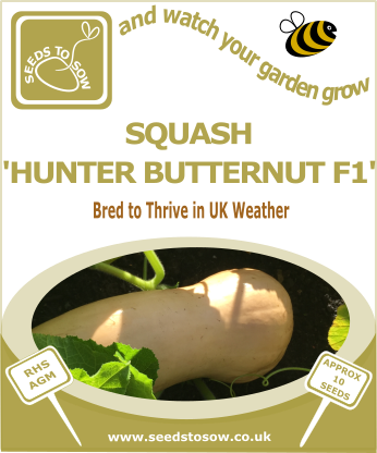Squash Butternut Hunter F1 - Seeds to Sow Limited