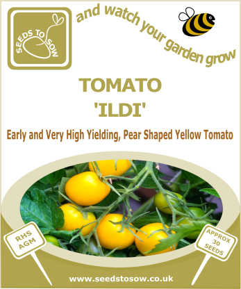 Tomato Ildi - Seeds to Sow Limited
