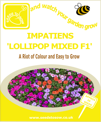 Impatiens - Lollipop Mixed F1