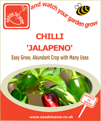 Chilli Jalapeno - Seeds to Sow Limited