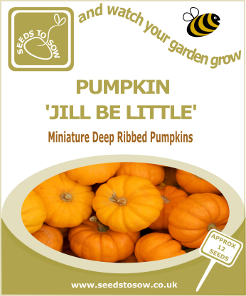 Pumpkin Jill Be Little - Seeds to Sow Limited