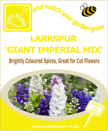 Larkspur - Giant Imperial Mix - Seeds to Sow Limited