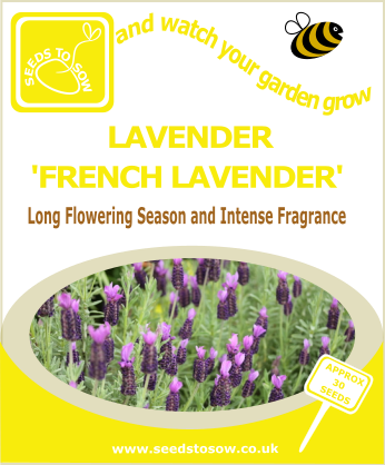 Lavender - French Lavender - Seeds to Sow Limited