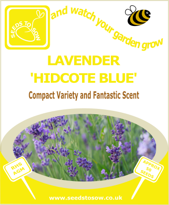 Lavender - Hidcote Blue - Seeds to Sow Limited