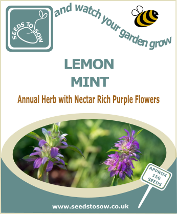 Lemon Mint - Seeds to Sow Limited