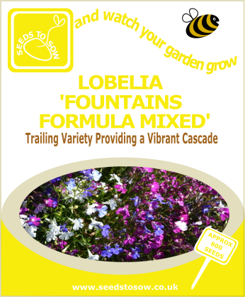 Lobelia - Fountains Formula Mixed - Seeds to Sow Limited
