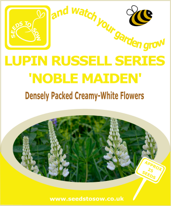 Lupin - Russell Series 'Noble Maiden'