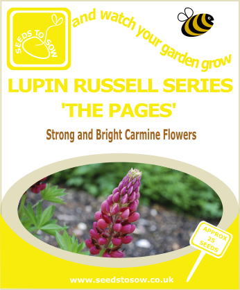 Lupin - Russell Series 'The Pages' - Seeds to Sow Limited