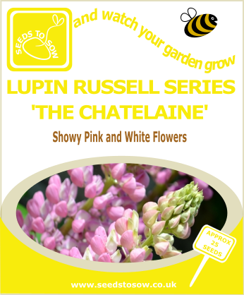 Lupin - Russell Series 'The Chatelaine' - Seeds to Sow Limited