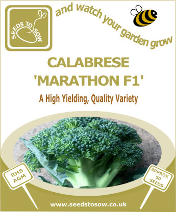 Calabrese Marathon F1 - Seeds to Sow Limited