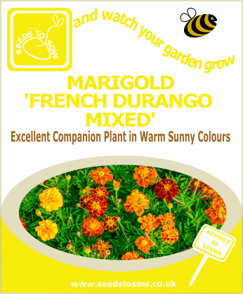 Marigold - French Durango Mixed - Seeds to Sow Limited
