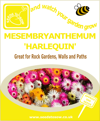 Mesembryanthemum - Harlequin - Seeds to Sow Limited