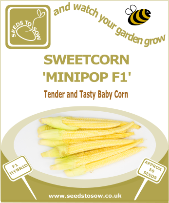 Sweetcorn Minipop F1 - Seeds to Sow Limited