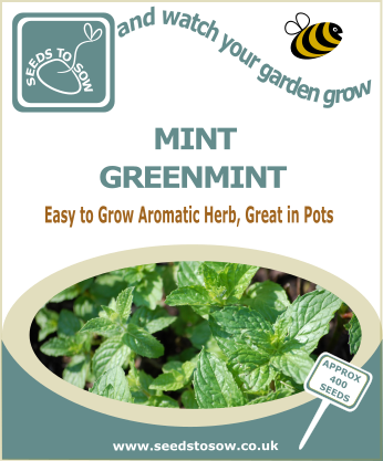 Mint (Greenmint)