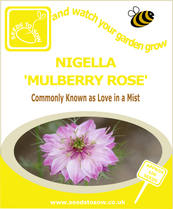 Nigella Mulberry Rose - Seeds to Sow Limited
