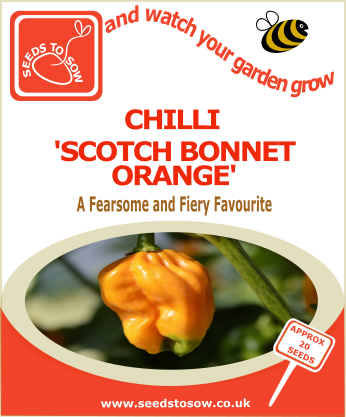 Chilli Orange Scotch Bonnet