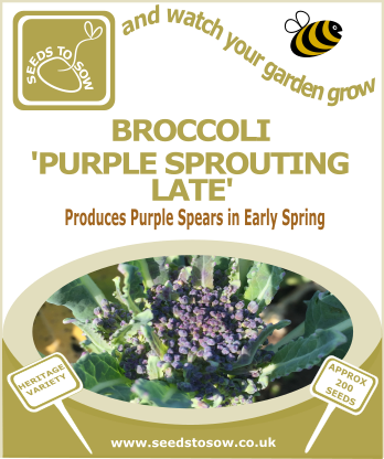 Broccoli Purple Sprouting Late - Seeds to Sow Limited
