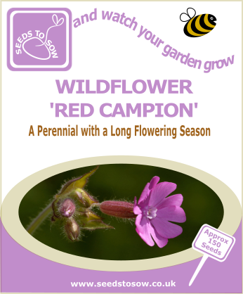 Wildflower -Red Campion - Seeds to Sow Limited
