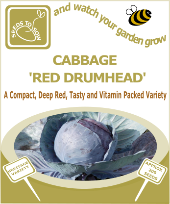 Cabbage Red Drumhead - Seeds to Sow Limited