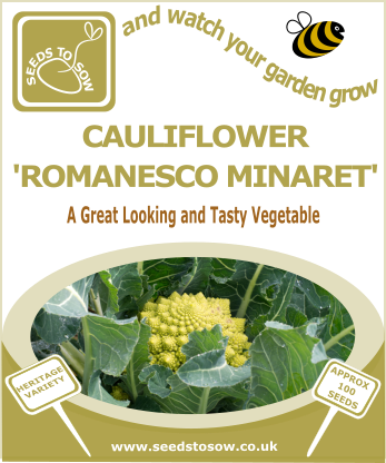 Cauliflower Romanesco Minaret