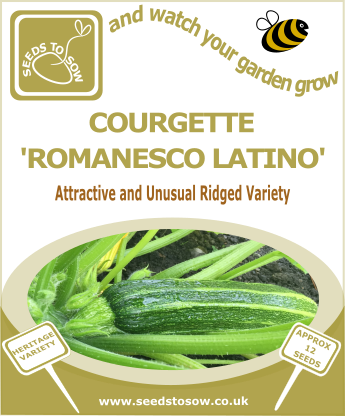 Courgette Romanesco Latino - Seeds to Sow Limited