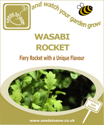Salad Leaves Wasabi Rocket - Seeds to Sow Limited